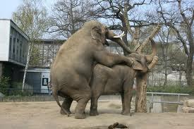 Smart Elephants